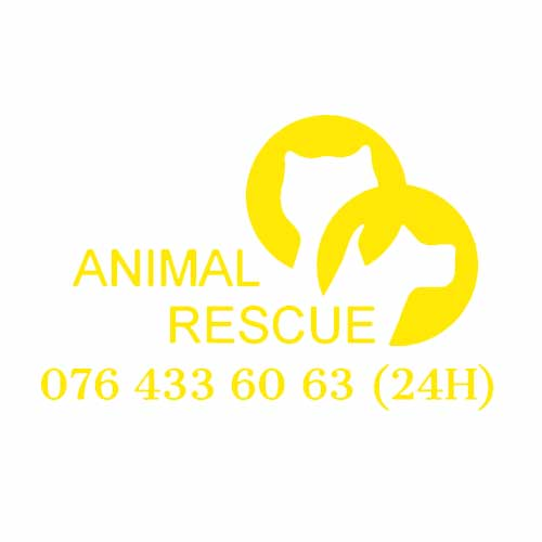 Here4You Partner Animal Rescue