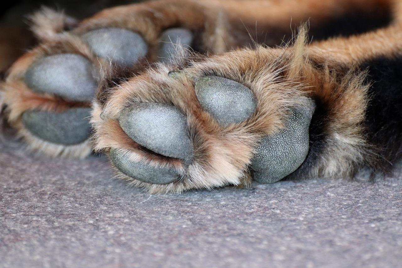 dog paw, dog, paw